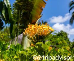 Grounds at the Four Seasons Resort Maldives at Kuda Huraa
