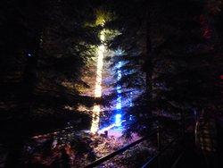 trees lights