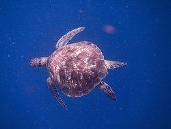 Swim with Sea Turtle