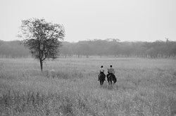 Lilayi Horseback Safari