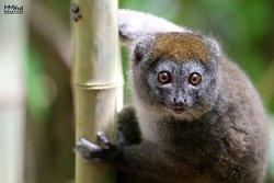 Madagascar Endemics and Resorts