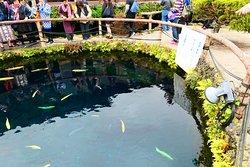 中池は美しい青色の池で、中には鯉が泳いでいます。
