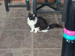 Mikki - the feline master