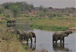African Elephant, Greater Kruger National Park, South Africa
