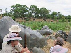 Elephant on foot, Greater Kruger National Park, South Africa