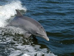 Cape Coral Dolphin Tours