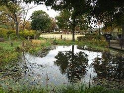 ふれあいの池と公園