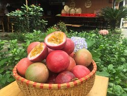 Organic Farm in Hoi An