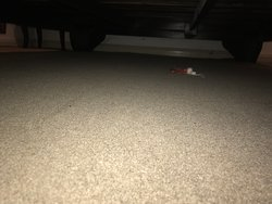 Dirty tampon under bed