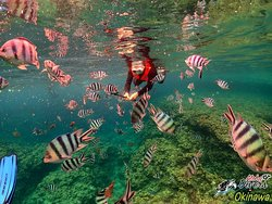 Snorkel em Okinawa - Snorkeling in Okinawa