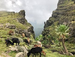 Simien View Tour & Travel