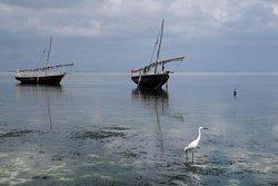 Отлив в северной части Нунгви (Занзибар)
