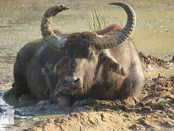 Wallowing in the mud....