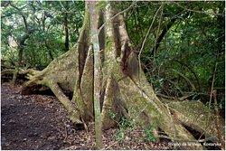 Rincon de La Vieja National Park