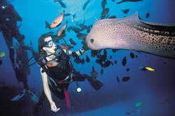 Paradis Beachcomber Golf Resort & Spa - Water Sports - Diving