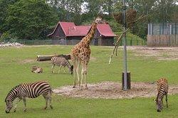 Oliwa Zoo