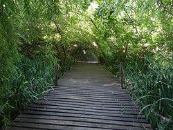 Muy buenas pasarelas de madera entre la selva.