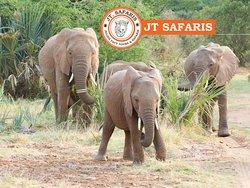 Julius Tours and Safaris