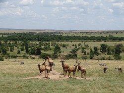 Panorama near Lion Camp