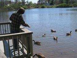 Desmond Pond  - South Windsor