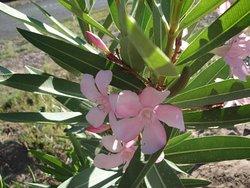 les jardins de la vallée du Mgoun