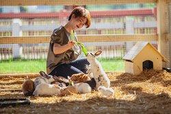vPattaya Sheep Farm