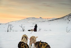 Active Tromso
