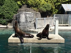 Our sea lions posing for their photo op!