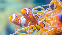 Did you find Nemo?