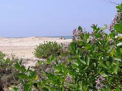 Jetwing Yala - beach
