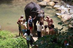 Elephant in Phuket