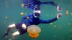 Lenmakana Jellyfish Lake