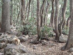 High mountan forest, Ifrane National Park