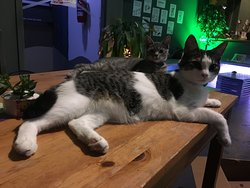 OCC cats