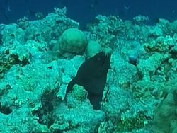 Went on a snorkelling extravaganza. Was so much to see. Maafi died down to take a video for us.