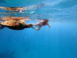 OMG Turtle!!!
