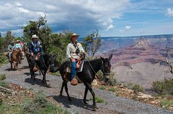 Canyon Vistas Mule Ride