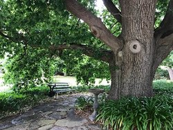 Relaxing under the cool, big old oak tree.