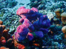 Scuba dive the Heart of the Coral Triangle!!