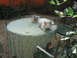 Adorable cat on the backyard table!