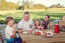 EXPERIENCE THE NOOSA HINTERLAND -  FARM EXPERIENCE