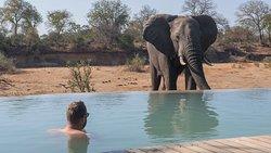 Hey, big boy! Zum Artikel: https://niedblog.de/andbeyond-ngala-tented-camp/