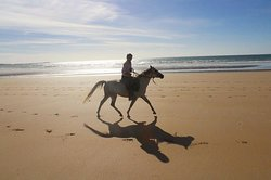 Naranwtapu National Park on our famous five day Tassie Tiger Trail Horse Adventure.
