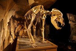 Musee de l'Ours des Cavernes