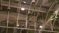 Upside down plants