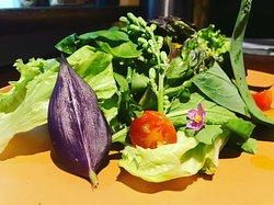 Salada de Pancs com Tomates Quentes e Molho de Maracujá