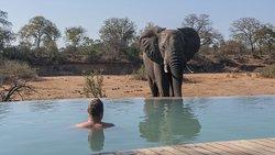 Elefant am Pool (niedblog.de)