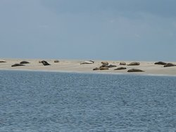 Seehundbank auf Borkum
