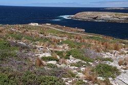 kangaroo island Admiral Arch