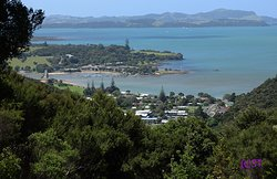 Opua Forest Lookout Track